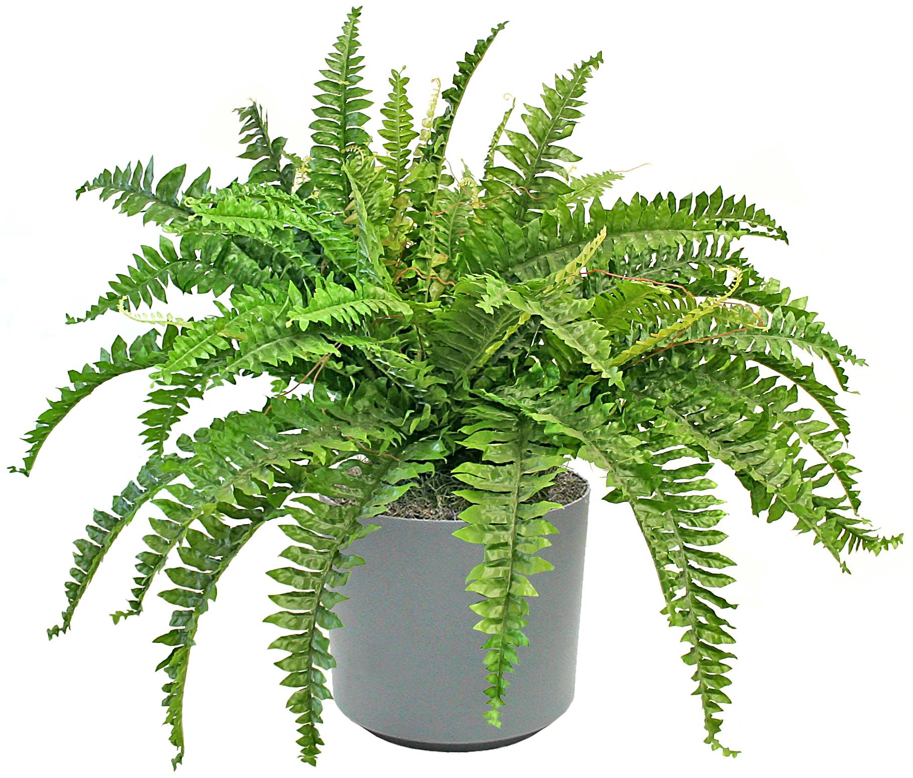 10 air purifying indoor plants homafrica for Best air purifying plants for bedroom
